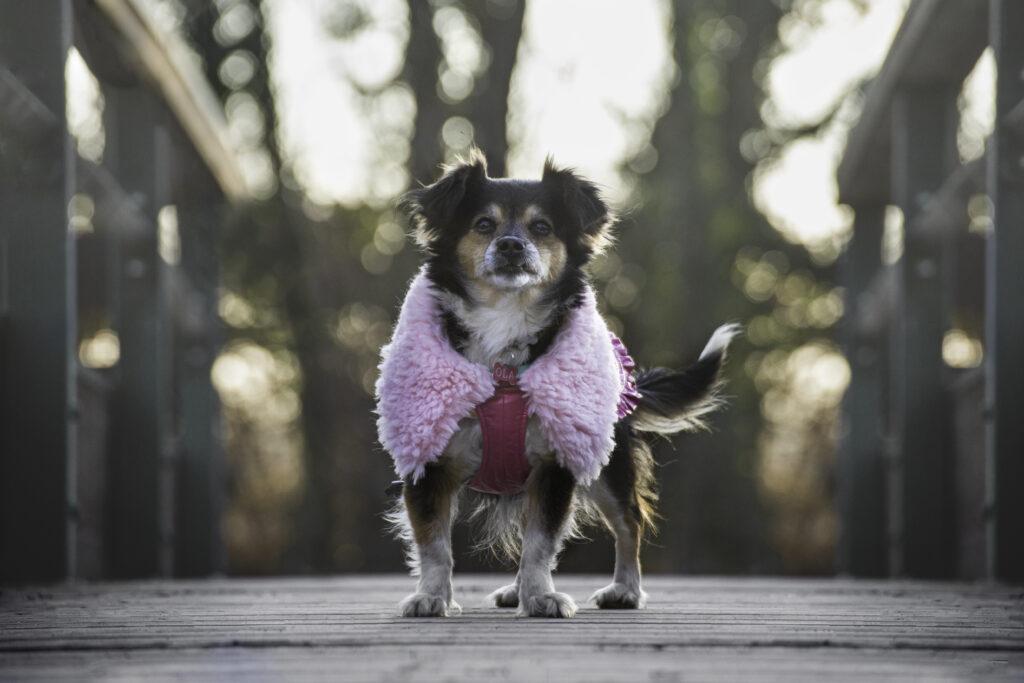 Cane sul ponte in un parco indossa cappotto rosa